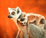 Zoo_Borysew_1