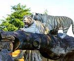 Zoo_Borysew_2
