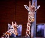 Zoo_Borysew_6