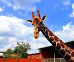 Zoo_Borysew_8